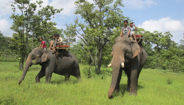 Les éléphants de Airavata Cambodia